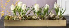 Más ideas para nuestras plantas y flores preferidas... | Plantas