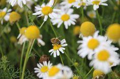 Grosfillex accompagne l'été et le soleil avec une collection de #mobilier #outdoor pour profiter d'un moment de #détente au #jardin. Nature, The Originals, Moment, Plants, Vintage, Collection, Gardens, Terrace, Daisies
