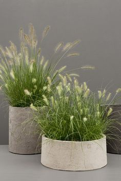 love the simple grass in these planters