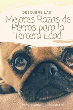 Lino Natural De Perro De Diseño Tela Aspecto Shabby Perros Tapicería bolsas Crafts