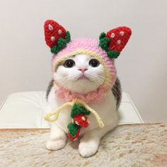 Look at the DIY pretty headgear made by the Japanese girl for her pet cat. You can also make one for your pet cat! - Page 35 of 56 - zzzzllee I Love Cats, Cool Cats, Kittens Cutest, Cats And Kittens, Cats In Hats, Cat Hat, Cat Costumes, Oui Oui, Cute Little Animals