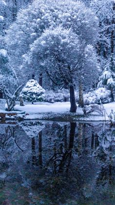 First snow at the garden pond. Southern Finland.