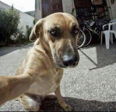 Weird, weird things happen when dogs get ahold of cameras.