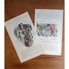 Vintage Colorful Anatomical Drawings of the  by Just Smashing Darling on Etsy