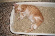 Filhotinho dormindo na caixa de areia - 3 meses