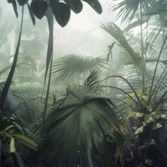 A cloud forest wants CLOUDS, not rain. A fogger may be better than a misting system as many of the plants actually don't like water sitting on them at all, but need extremely high humidity.