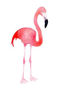 Pink and a Flamingo....yes of course, Sam!