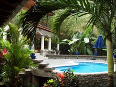 MONKEYS GALORE! Luxury Jungle Oasis with Private Pool and Wildlife Everywhere!. This superb vacation rental comprises of 2 remodeled villas set on half an a...
