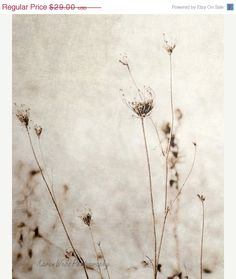 Sale Fine Art Photography Queen Anne's Lace Rustic So Shabby8x10KarenWebb Photography on Etsy, $20.30