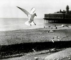 Jacques Henri Lartigue • Seagull