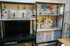 ♥ Pet Bird Cage Ideas ♥  Parakeet play ground version 1,I made this in my office/tv room, Now I just need to add more toys, play gym, bird play stand, toy