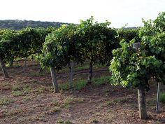 America's Top 10 Wine Destinations
