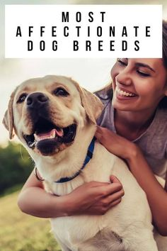 most affectionate dog breeds Fun Facts About Dogs, Dog Facts, Purebred Dogs, Border Terrier, Lhasa Apso, King Charles Spaniel, Mountain Dogs, Pet Dogs, Pets