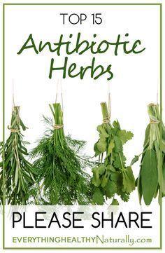 Top 15 Antibiotic Herbs www.greennutrilabs.com