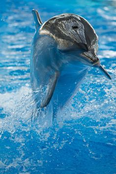 Dolphin Jump by Sebastien et Nelly lagree on 500px