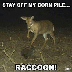Crazy deer
