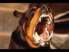 Savage Hybrid Dogs (Documentary)