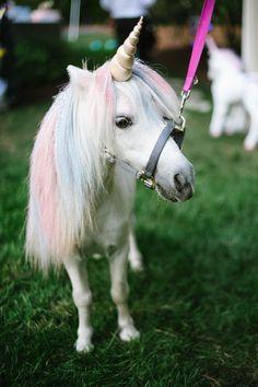 26 Best Real Unicorn Images Real Unicorn Mythological Creatures