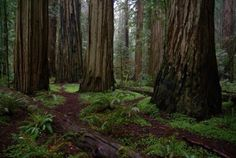 "According to this writer - ""If you just have enough time to see one grove of redwood trees during your visit to northern California, I'd strongly suggest checking out Stout Grove.""  Looks good to me!!!"