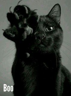 I love black cats 💙