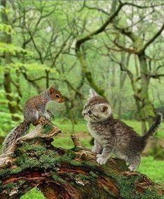 Écureuil et chaton. Ça ressemble à un montage...