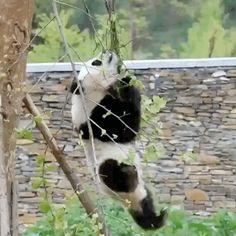 Panda al rescate!