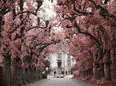 beautifull trees
