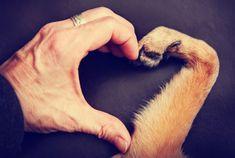 DE TODO UN POCO: 7 cosas que mi perro me enseñó