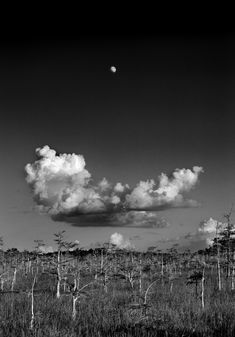 """Moon Rise"" Everglades, Florida by Clyde Butcher, 1986.  I own a 13x18in. version of this, which I bought from the artist in 1993."