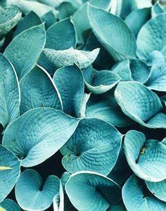 Aquamarine fauna. Natural beauty