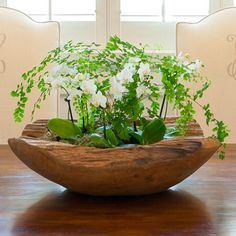 Teak Decorative Bowl With 2 Mini Orchids And Maiden Hair Fern. Inside Garden, Home And Garden, Ikebana, Orchid Planters, Pot Plante, Plantation, Vases Decor, Houseplants, Garden Inspiration