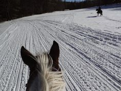 Cold winter trail ride as seen between the ears of a horse