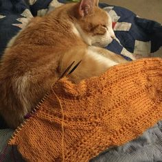 A quilt some knitting & a cat on you lap. A perfect way to spend your Friday evening.