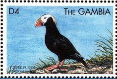 Stamp: Tufted Puffin(Fratercula cirrhata) (Gambia) (Sea Birds) Mi:GM 3356,Sn:GM 2134h