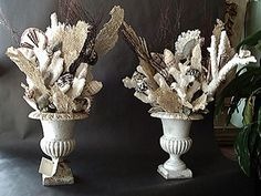 Sea Shell Accessories - Urns filled with Shells, Coral and Sea Fans.  Want this! mr