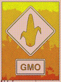 """According to the Environment International review """"GM crops and the rat digestive tract: A critical review,"""" the """"safety"""" of genetically modified products is far from established. http://environmentalillnessnetwork.tumblr.com/post/102548142093/gmo-science-critical-review #GMO #GMOs"""