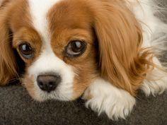 Family Designer Dog Breeds - Best Dogs for Families - Redbook