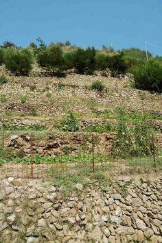 Latte Frazione di Ventimiglia (IM)  muri a secco