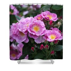 """Lucky Floribunda Roses Shower Curtain ~  This beautiful shower curtain is made from 100% polyester fabric and includes 12 holes at the top of the curtain for simple hanging.  The total dimensions of the shower curtain are 71"""" wide x 74"""" tall. www.ronablack.com"""