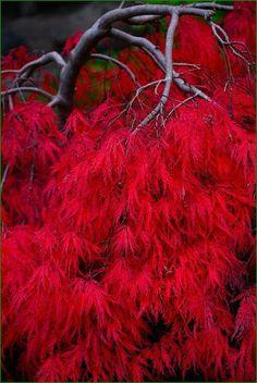 ✯ Yashiro Japanese Garden, Olympia, Washington