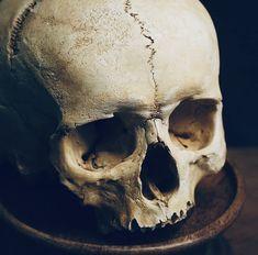 Horror Artwork, Skull Artwork, Skull Reference, Lovecraftian Horror, Underwater Painting, Totenkopf Tattoos, Human Skull, Vanitas, Skull Tattoos