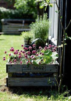 Gardening In The City Container Plants, Container Gardening, Gardening Tips, Small Gardens, Outdoor Gardens, Flea Market Gardening, Pot Jardin, Garden Cottage, Medicinal Plants