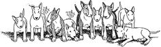 Bull Terrier Rescue, Inc.