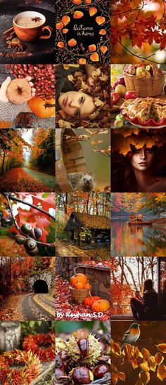 '' Colorful Autumn '' by Reyhan Seran Dursun