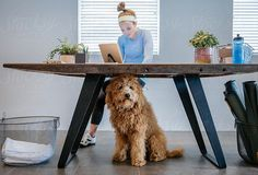 Woman at fitness studio works on a tablet computer while her dog hangs out under her desk