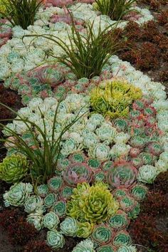 The Top Succulent Landscaping