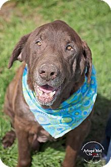 4/19 I am a very sweet boy and I would love to be part of your life. Please meet me soon!**** lola, TX - Labrador Retriever Mix. Meet Sampson, a dog for adoption. www.adoptapet.com...