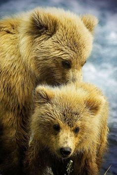 """Cubs2 (by Cypres0099) "" - Pixdaus"