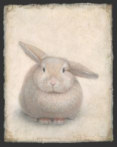 Document sans nom Illustration Botanique, Art Et Illustration, Botanical Illustration, Silverpoint, Animal Drawings, Rabbits, Drawing Sketches, Colored Pencils, Kittens