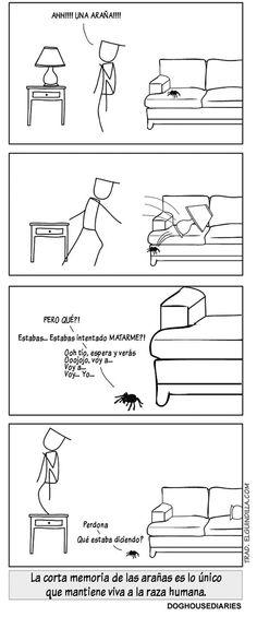 La corta memoria de las arañas. Viñeta por Doghouse Diaries.